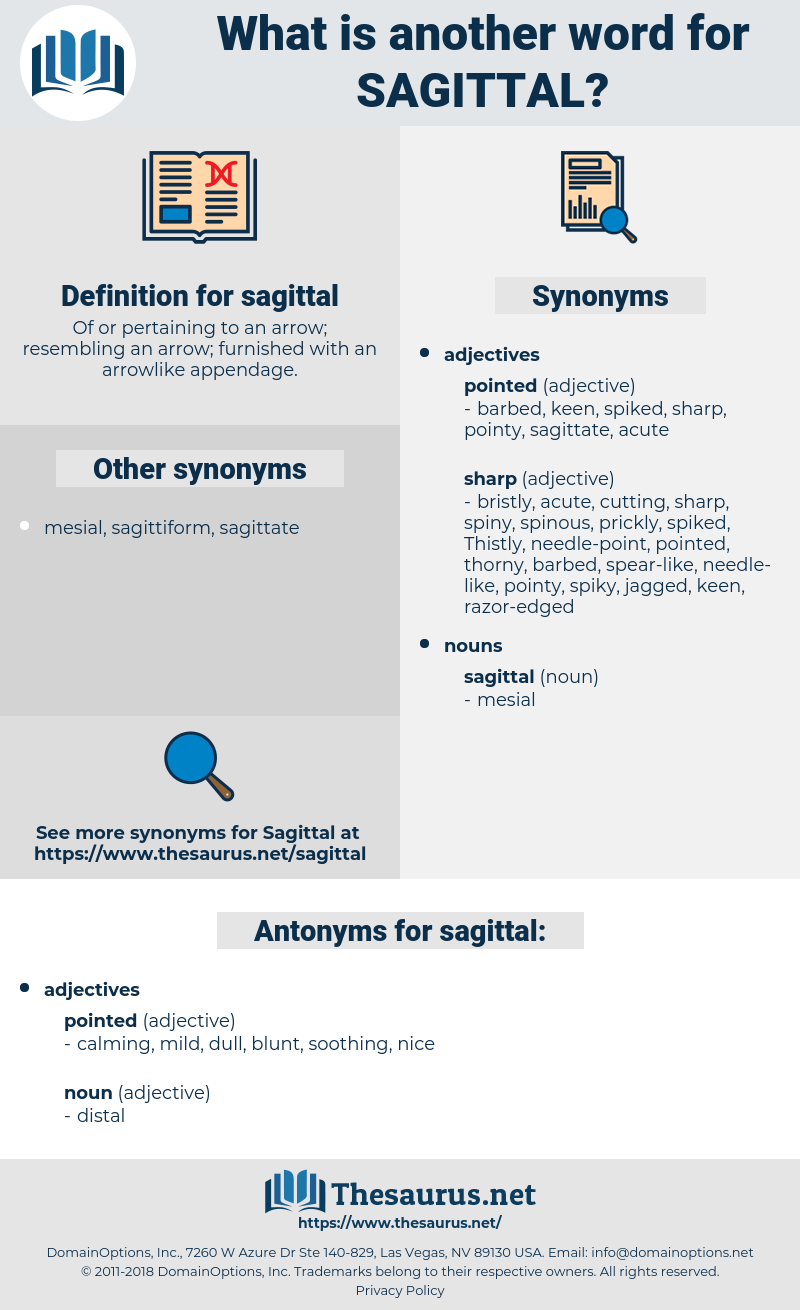 sagittal, synonym sagittal, another word for sagittal, words like sagittal, thesaurus sagittal