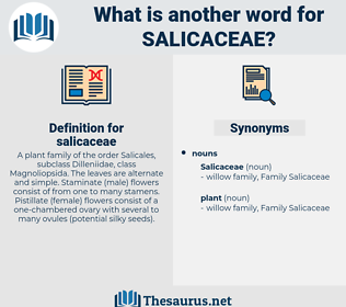 salicaceae, synonym salicaceae, another word for salicaceae, words like salicaceae, thesaurus salicaceae