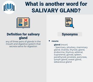 salivary gland, synonym salivary gland, another word for salivary gland, words like salivary gland, thesaurus salivary gland