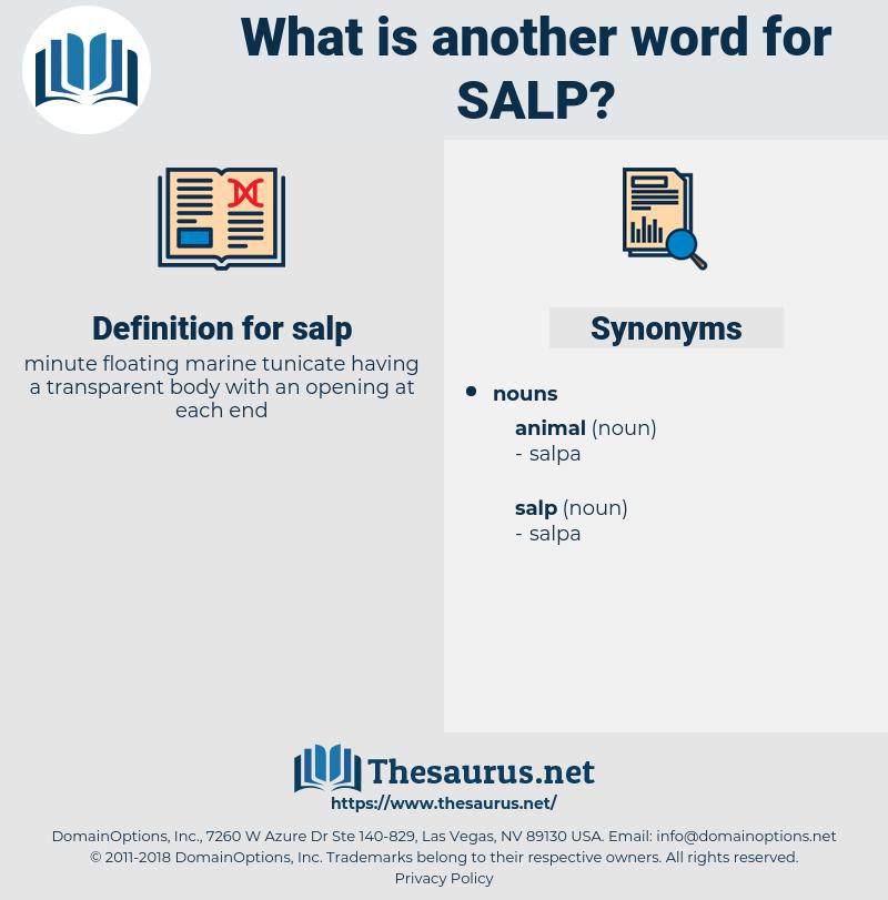 salp, synonym salp, another word for salp, words like salp, thesaurus salp