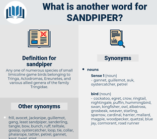 sandpiper, synonym sandpiper, another word for sandpiper, words like sandpiper, thesaurus sandpiper