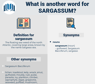 sargassum, synonym sargassum, another word for sargassum, words like sargassum, thesaurus sargassum