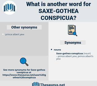Saxe-gothea Conspicua, synonym Saxe-gothea Conspicua, another word for Saxe-gothea Conspicua, words like Saxe-gothea Conspicua, thesaurus Saxe-gothea Conspicua