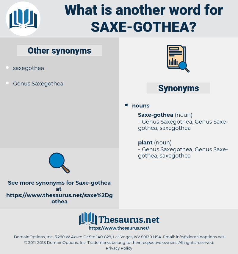 saxe-gothea, synonym saxe-gothea, another word for saxe-gothea, words like saxe-gothea, thesaurus saxe-gothea