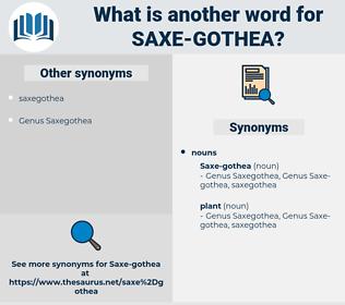 saxe-gothea, synonym saxe-gothea, another word for saxe-gothea, words like saxe-gothea, thesaurus saxe-gothea