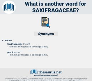 saxifragaceae, synonym saxifragaceae, another word for saxifragaceae, words like saxifragaceae, thesaurus saxifragaceae