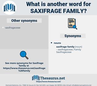 saxifrage family, synonym saxifrage family, another word for saxifrage family, words like saxifrage family, thesaurus saxifrage family