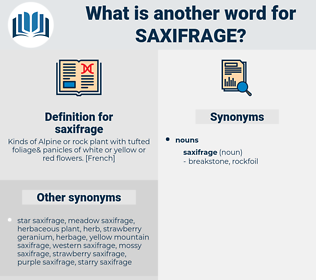 saxifrage, synonym saxifrage, another word for saxifrage, words like saxifrage, thesaurus saxifrage