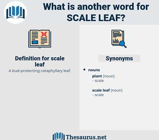 scale leaf, synonym scale leaf, another word for scale leaf, words like scale leaf, thesaurus scale leaf