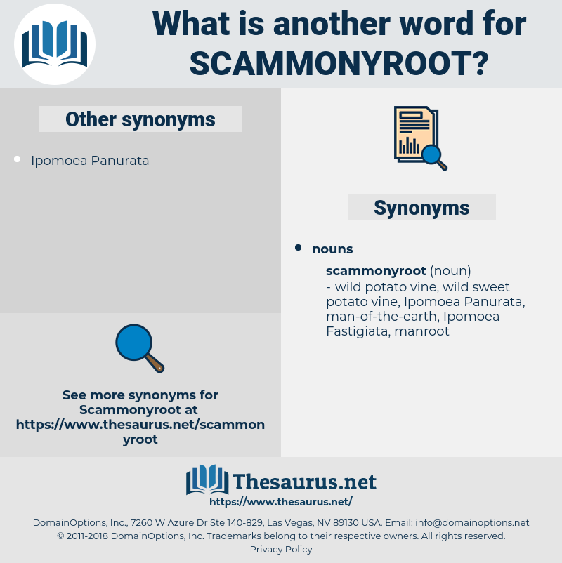 scammonyroot, synonym scammonyroot, another word for scammonyroot, words like scammonyroot, thesaurus scammonyroot