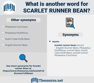 scarlet runner bean, synonym scarlet runner bean, another word for scarlet runner bean, words like scarlet runner bean, thesaurus scarlet runner bean
