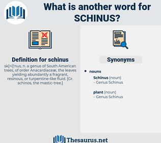 schinus, synonym schinus, another word for schinus, words like schinus, thesaurus schinus
