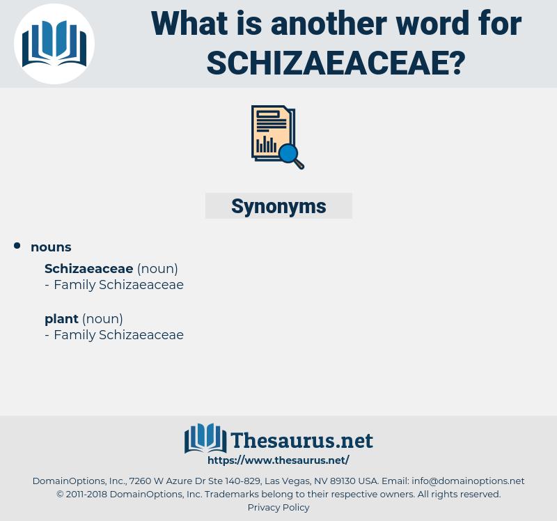 schizaeaceae, synonym schizaeaceae, another word for schizaeaceae, words like schizaeaceae, thesaurus schizaeaceae