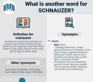 schnauzer, synonym schnauzer, another word for schnauzer, words like schnauzer, thesaurus schnauzer