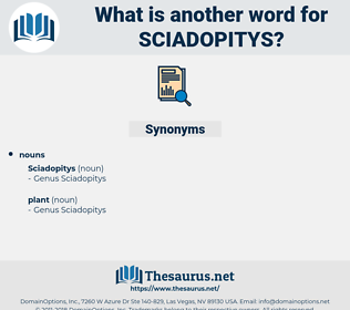 sciadopitys, synonym sciadopitys, another word for sciadopitys, words like sciadopitys, thesaurus sciadopitys