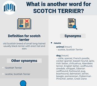 scotch terrier, synonym scotch terrier, another word for scotch terrier, words like scotch terrier, thesaurus scotch terrier