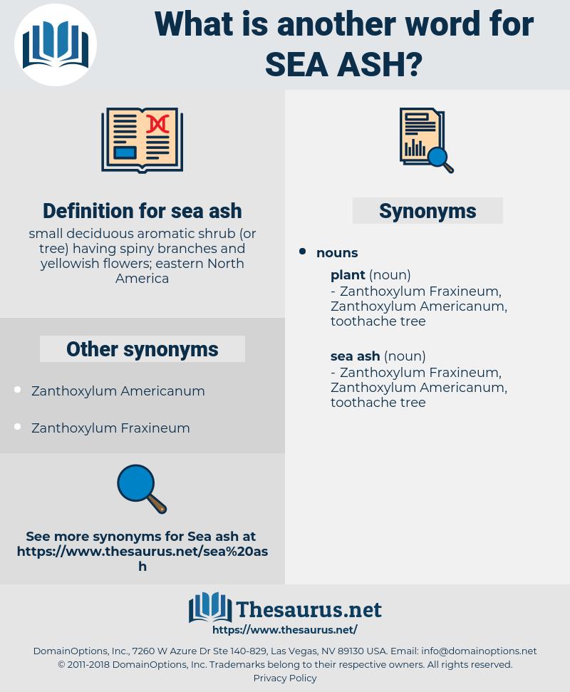 sea ash, synonym sea ash, another word for sea ash, words like sea ash, thesaurus sea ash