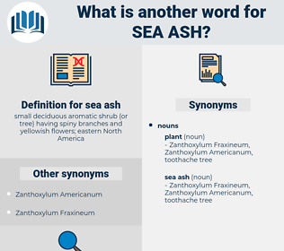 sea ash, synonym sea ash, another word for sea ash, words like sea ash, thesaurus sea ash