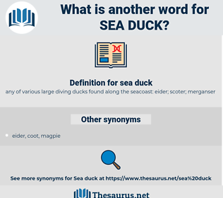 sea duck, synonym sea duck, another word for sea duck, words like sea duck, thesaurus sea duck