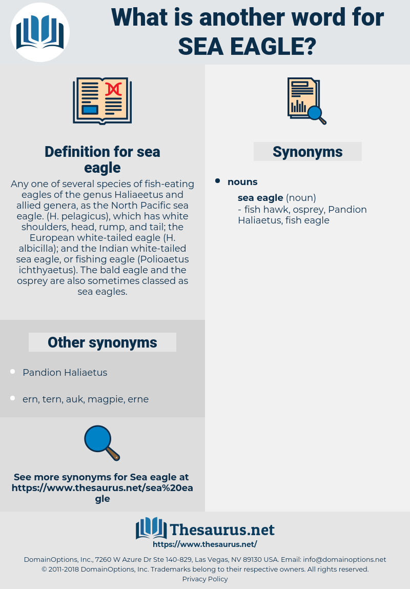 sea eagle, synonym sea eagle, another word for sea eagle, words like sea eagle, thesaurus sea eagle