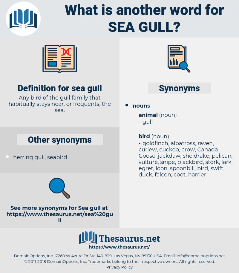 sea gull, synonym sea gull, another word for sea gull, words like sea gull, thesaurus sea gull
