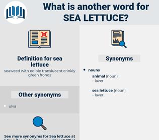 sea lettuce, synonym sea lettuce, another word for sea lettuce, words like sea lettuce, thesaurus sea lettuce