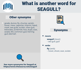 seagull, synonym seagull, another word for seagull, words like seagull, thesaurus seagull