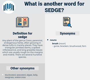sedge, synonym sedge, another word for sedge, words like sedge, thesaurus sedge