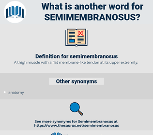 semimembranosus, synonym semimembranosus, another word for semimembranosus, words like semimembranosus, thesaurus semimembranosus