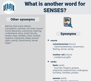senses, synonym senses, another word for senses, words like senses, thesaurus senses