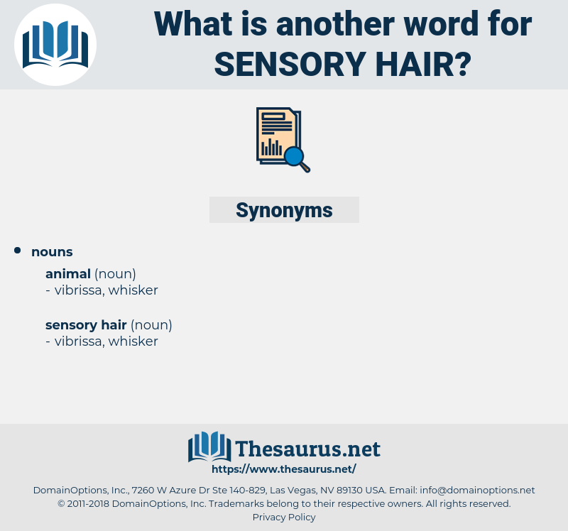 sensory hair, synonym sensory hair, another word for sensory hair, words like sensory hair, thesaurus sensory hair