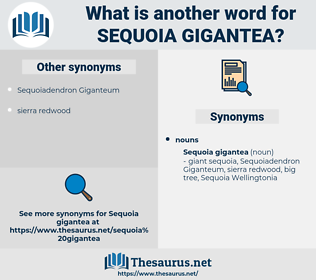 Sequoia Gigantea, synonym Sequoia Gigantea, another word for Sequoia Gigantea, words like Sequoia Gigantea, thesaurus Sequoia Gigantea