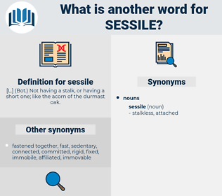 sessile, synonym sessile, another word for sessile, words like sessile, thesaurus sessile
