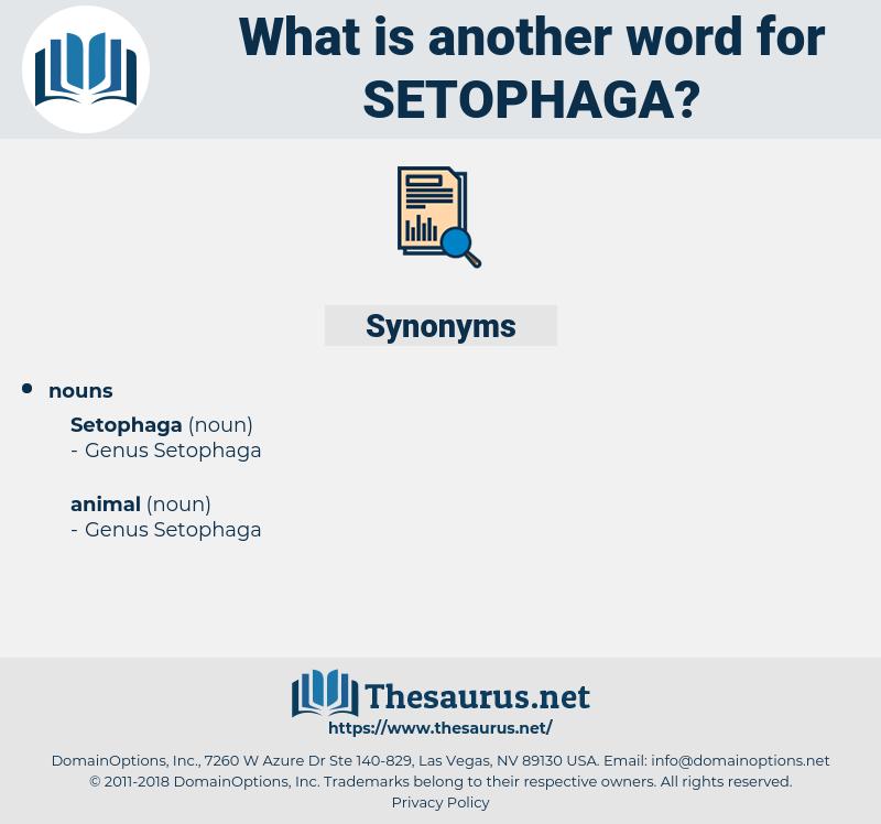 setophaga, synonym setophaga, another word for setophaga, words like setophaga, thesaurus setophaga