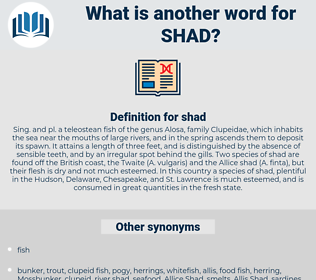 shad, synonym shad, another word for shad, words like shad, thesaurus shad