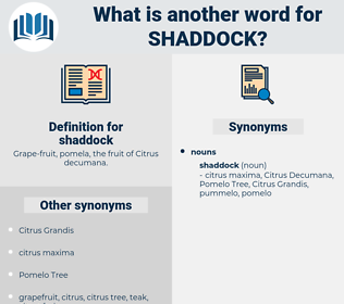 shaddock, synonym shaddock, another word for shaddock, words like shaddock, thesaurus shaddock