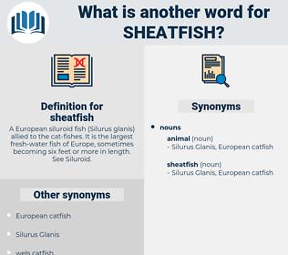 sheatfish, synonym sheatfish, another word for sheatfish, words like sheatfish, thesaurus sheatfish