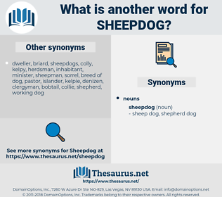 sheepdog, synonym sheepdog, another word for sheepdog, words like sheepdog, thesaurus sheepdog