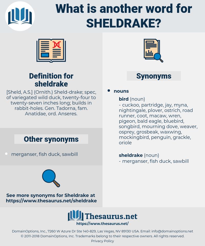 sheldrake, synonym sheldrake, another word for sheldrake, words like sheldrake, thesaurus sheldrake