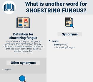 shoestring fungus, synonym shoestring fungus, another word for shoestring fungus, words like shoestring fungus, thesaurus shoestring fungus