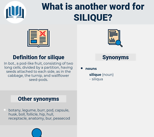 silique, synonym silique, another word for silique, words like silique, thesaurus silique