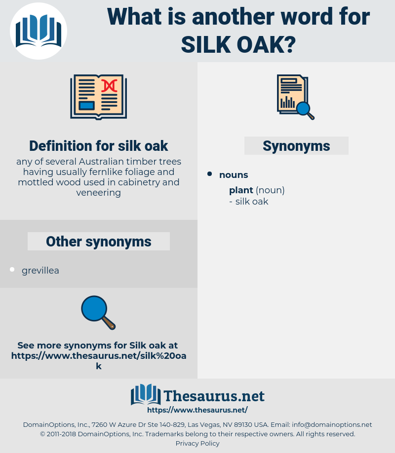 silk oak, synonym silk oak, another word for silk oak, words like silk oak, thesaurus silk oak