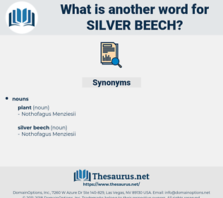 silver beech, synonym silver beech, another word for silver beech, words like silver beech, thesaurus silver beech