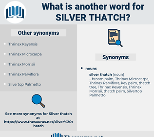 silver thatch, synonym silver thatch, another word for silver thatch, words like silver thatch, thesaurus silver thatch