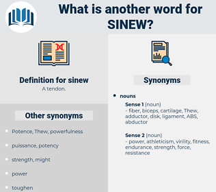 sinew, synonym sinew, another word for sinew, words like sinew, thesaurus sinew