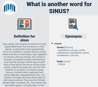 sinus, synonym sinus, another word for sinus, words like sinus, thesaurus sinus