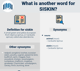 siskin, synonym siskin, another word for siskin, words like siskin, thesaurus siskin