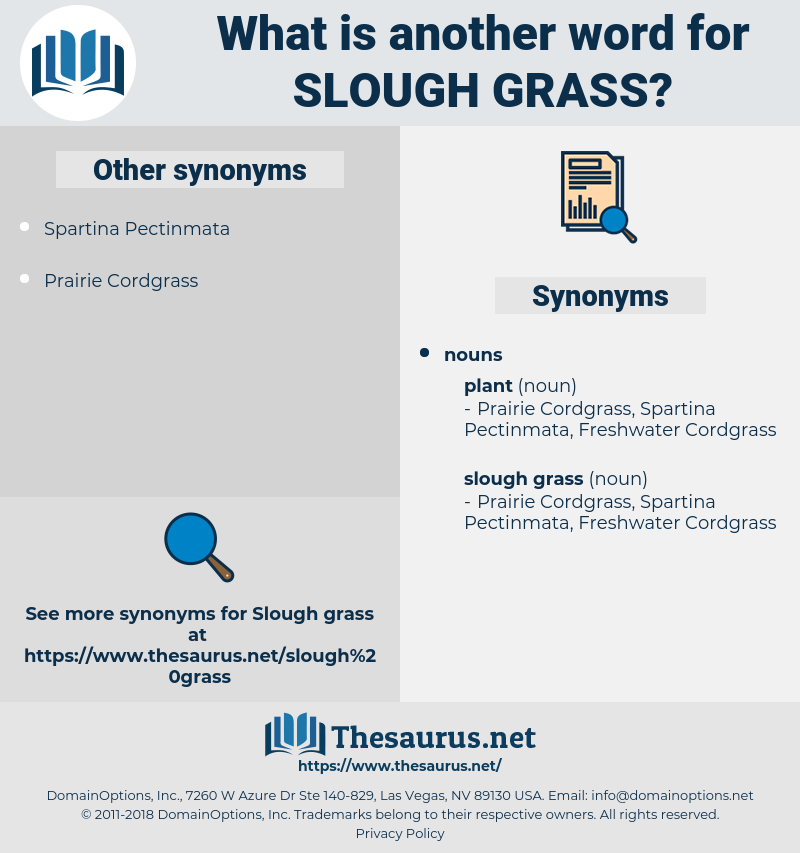 slough grass, synonym slough grass, another word for slough grass, words like slough grass, thesaurus slough grass