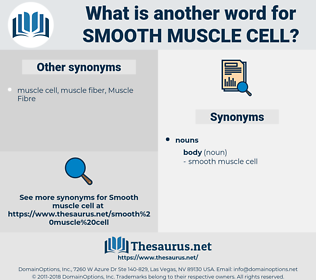smooth muscle cell, synonym smooth muscle cell, another word for smooth muscle cell, words like smooth muscle cell, thesaurus smooth muscle cell