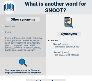 snoot, synonym snoot, another word for snoot, words like snoot, thesaurus snoot